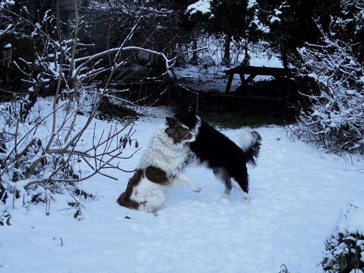 Dogs, snow & a stick