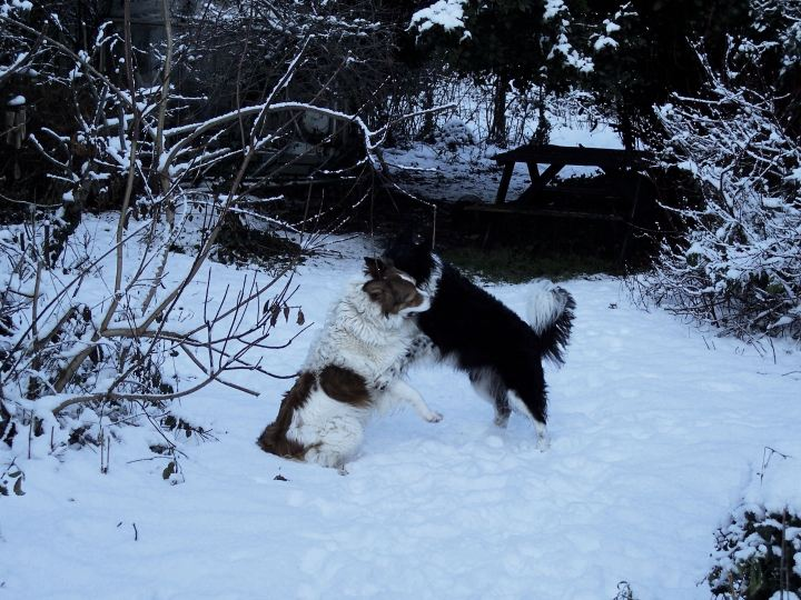 Dogs, snow & a stick