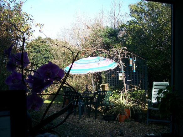 garden and bird feeder