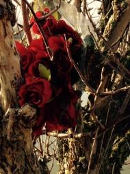 Roses tree 1
