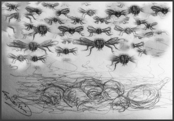 drawing of flies