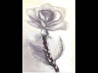 Rose in frame2